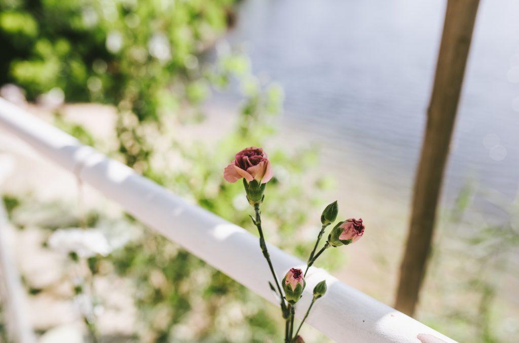 cortina de flores clavelinas laguna